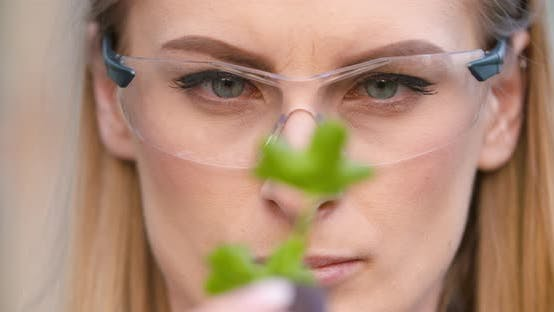 Thumbnail for Close Up of Scientist or Researcher Looking at Young Plant and Examining Plant