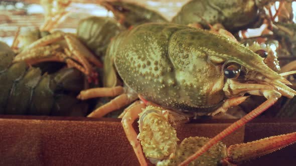 Thumbnail for Live Crayfish on a Wooden Table