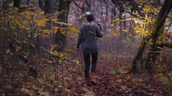 Thumbnail for Back View of A Woman with a Flashlight Is Walking Through a Dark Forest, Looking for Something.