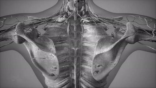 Anatomy Tomography Scan of Human Body