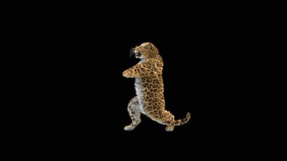 Leopard Dancing HD