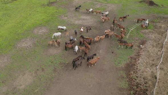 Thumbnail for The Herd of Horses Returned From the Pasture