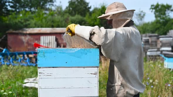 Eco Apiculture and Honey Production Business. Beekeeper Fumigating Bees with Smoke To Remove