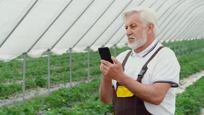 Farmer Using Cell Phone for Controlling Growth of Strawberry