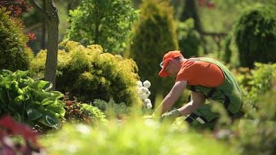Caucasian Gardener Taking Care of His Garden.