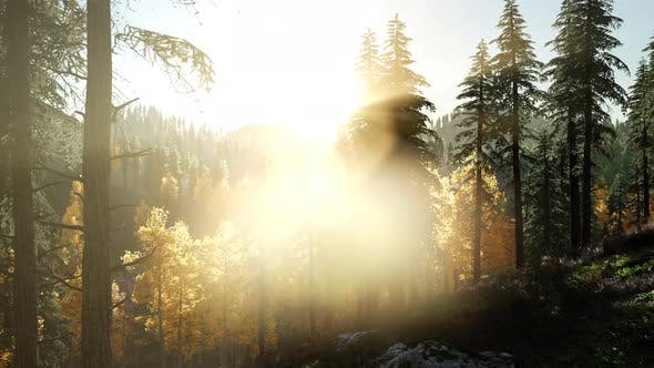 Thumbnail for Sun Shining Through Pine Trees in Mountain Forest