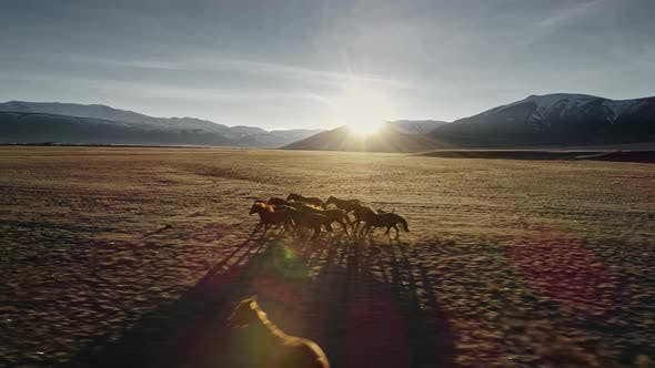 Thumbnail for Wild Horses Running. Herd of horses running on the steppes in the background mountain. Sunset. Slow