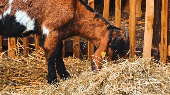 Thumbnail for Xmas Animals Behind Wooden Fence on Celebration of Christmas on Market