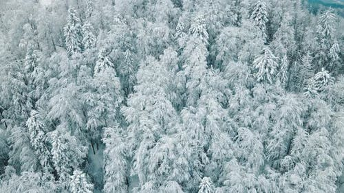 Aerial Top View of Snowcovered Frozen Trees Covered with Snow and Frost