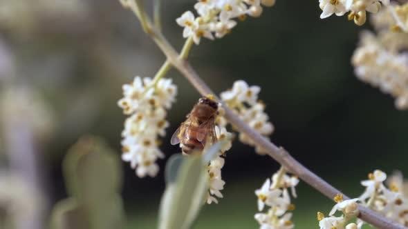 Bee Flower Slow Motion