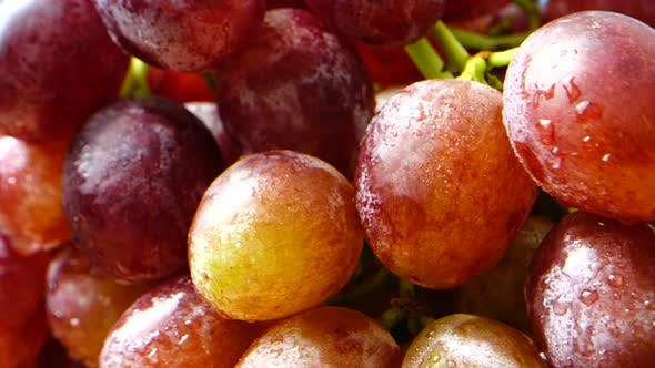 Thumbnail for Shooting Grapes in Motion