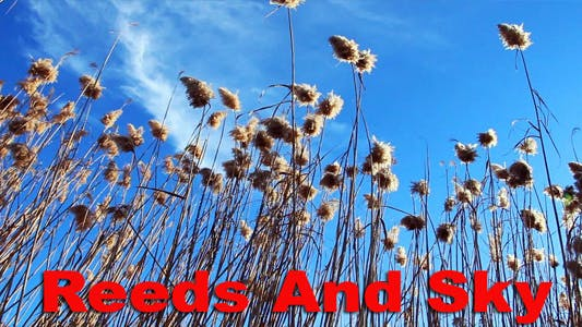 Thumbnail for Reeds And Sky