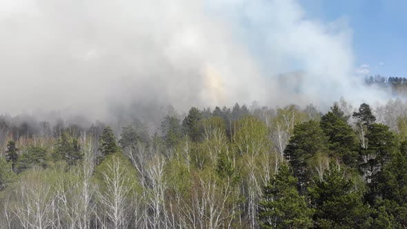 Thumbnail for Aerial View of Big Smoke Clouds and Fire on the Forest. Flying Over Wildfire and Plumes of Smoke.