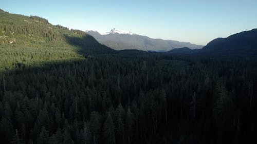 Drone Rising Above Forest Trees Revealing Black Tusk Mountain Peak
