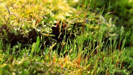 Thumbnail for Moss In Spring Forest Shot Slider 1