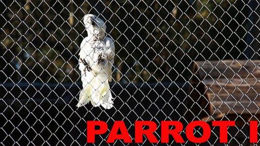 Thumbnail for Parrot II
