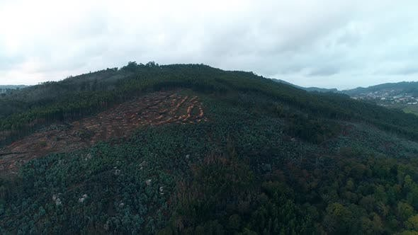Thumbnail for Mountain Deforestation