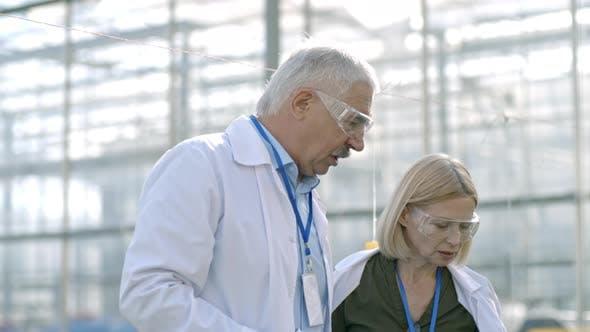 Agronomists Inspecting Seedlings in Greenhouse Nursery
