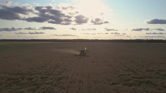 Thumbnail for Aerial View New Reaper Harvests Yellow Wheat at Backlight