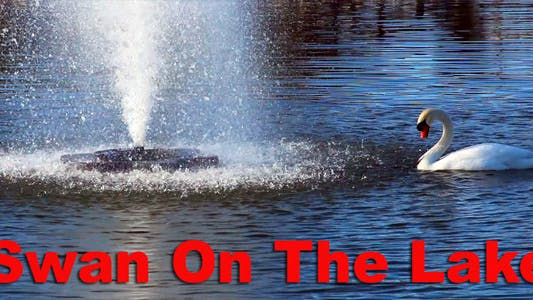 Thumbnail for Swan On The Lake