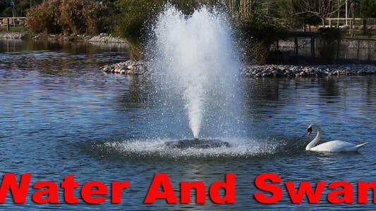 Thumbnail for Water And Swan