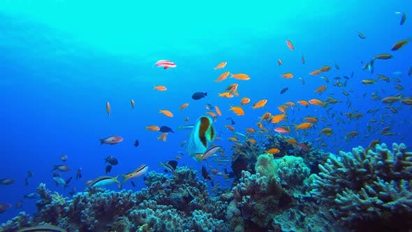Tropical Seascape Underwater Life