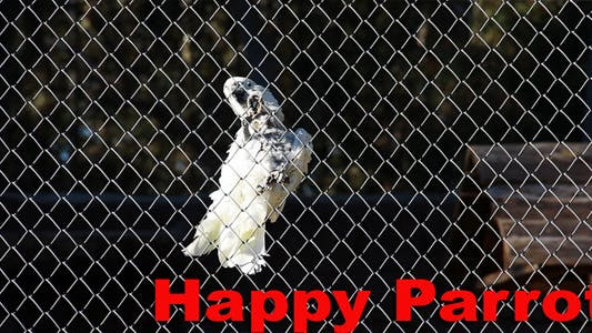 Thumbnail for Happy Parrot