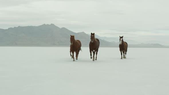 Thumbnail for Horses running across salt flats