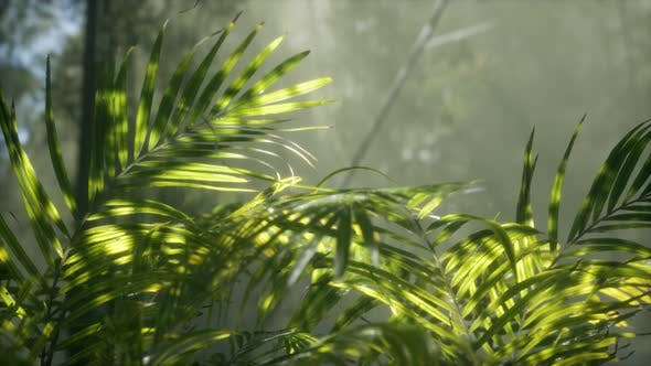 Thumbnail for Bright Light Shining Through the Humid Misty Fog and Jungle Leaves