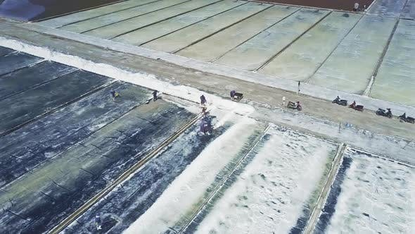 Thumbnail for Workers Rake Salt with Shovels From Sites To Road