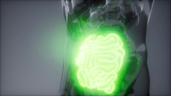 Thumbnail for Human Small Intestine Radiology Exam