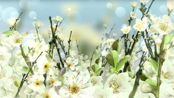 Thumbnail for Spring Blossom White