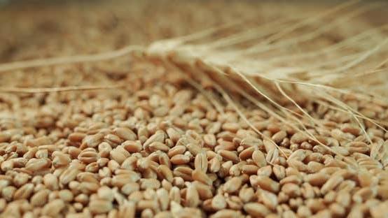 Das Weizenkorn ruht auf den Körnern
