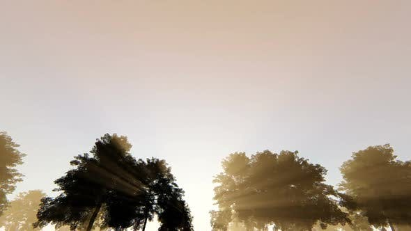 Thumbnail for On The Road - Trees and Rays