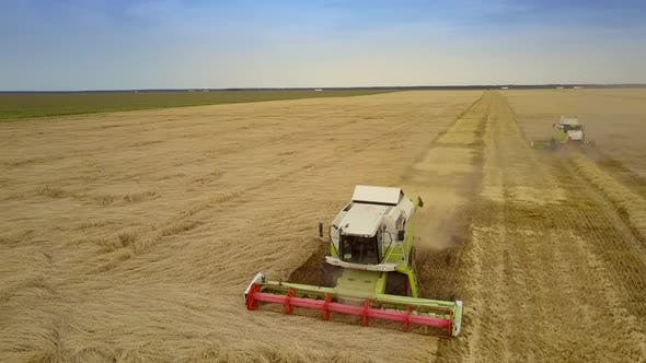 Close View Combine Reaps Rich Rye Crop in Field Raising Dust
