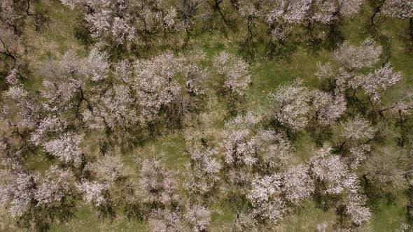 Spring Trees Luftaufnahme - Frühlingsfarben
