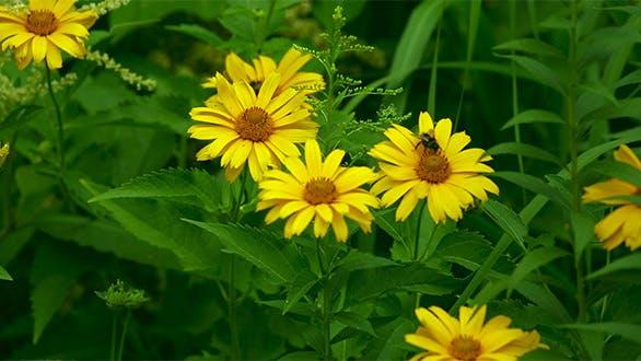 Thumbnail for Garden Flowers