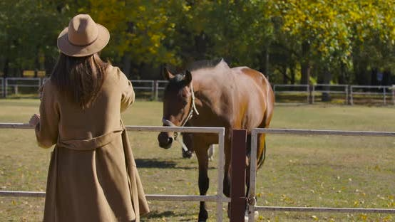 Thumbnail for Young Caucasian Woman with Long Brown Hair Coming Up To Corral with Graceful Brown Horse. Girl in