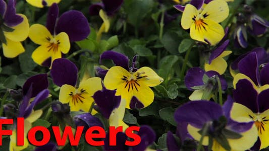 Thumbnail for Flowers