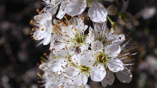 Thumbnail for Flowering Tree 02