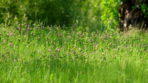 Grass in the Wind Background