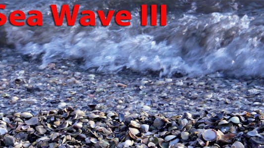 Thumbnail for Oyster And Sea Waves
