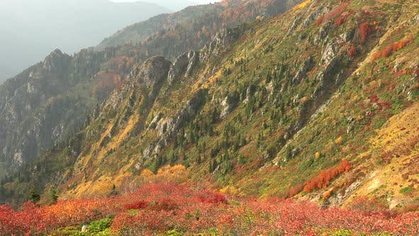Thumbnail for Mixed Forest Vegetation on the Hillside of the Valley in Colorful Autumn