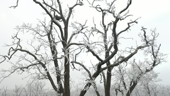 Rime on the Tree