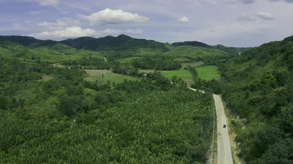 Cover Image for Mangrove Forest Along the Mountain and Winding Road in the Summer on the Coron, Busuanga