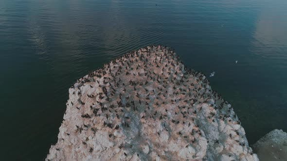 Thumbnail for An Island with Cormorants on Lake Baikal