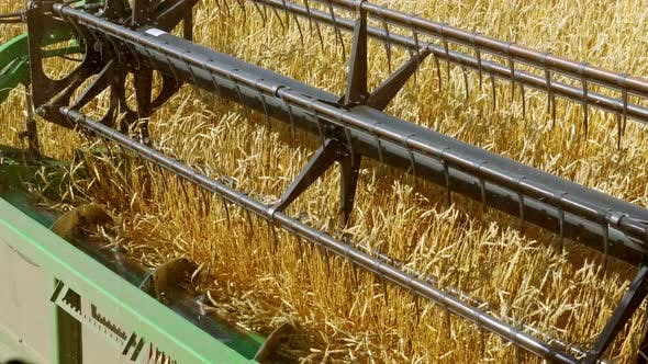 Thumbnail for Combine Harvester Gathers Wheat Crop at Farmland