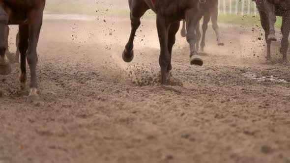 Herd of Horses Raises Dust