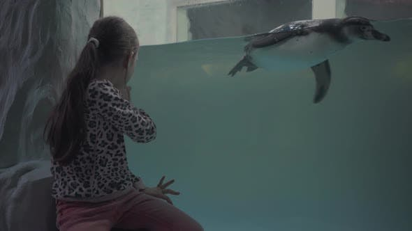 Thumbnail for Girl Look Through Glass in Oceanarium at Swimming Penguins