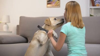 Glad Pet Owner Teaching Dog Commands